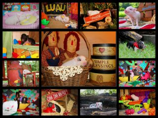 adopted-piggies-collage-6